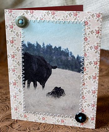 cow-calfcard-9696-web